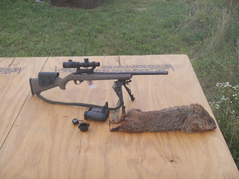 Hogue Overmolded Stock on the Ranch Rifle (Mini-14
