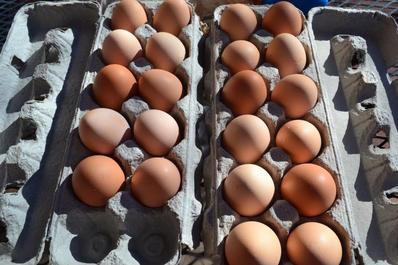Click image for larger version  Name:Eggs.jpg Views:143 Size:75.3 KB ID:95242