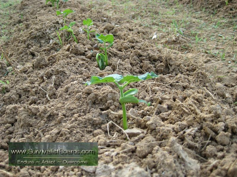 Click image for larger version  Name:garden-april-6-2010-1.jpg Views:72 Size:129.6 KB ID:28673
