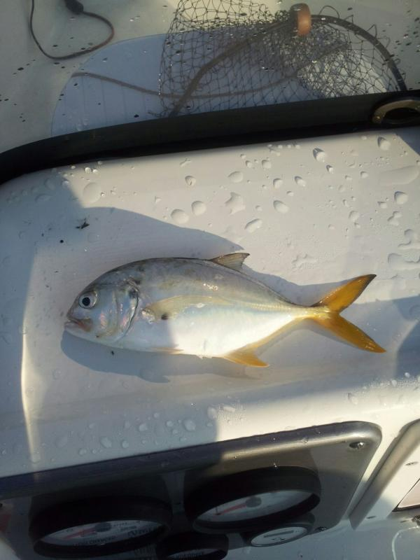 Click image for larger version  Name:pompano.jpg Views:49 Size:46.6 KB ID:78728