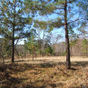 "The retreat = 65 acres in the ""Big Thicket"" East Texas"